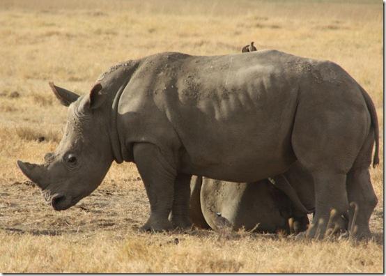 Safaribilder 2011 Uredigert 212