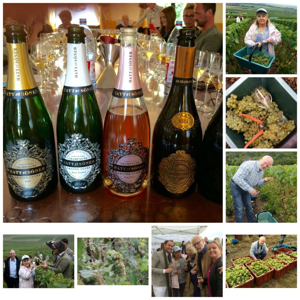 Druehøsting i Champagne